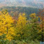 Drzewa na Grabowcu