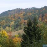 Grabowiec w październiku
