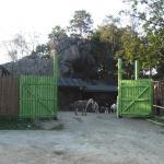 Kozie Skały