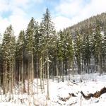Zima w marcu
