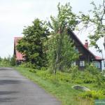 Schronisko za drzewami