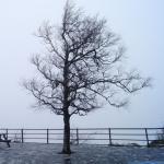 Szczeliniec i drzewo