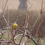 Wiosenne trele